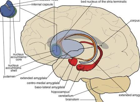 How The Menstrual Cycle Affects The female Brain
