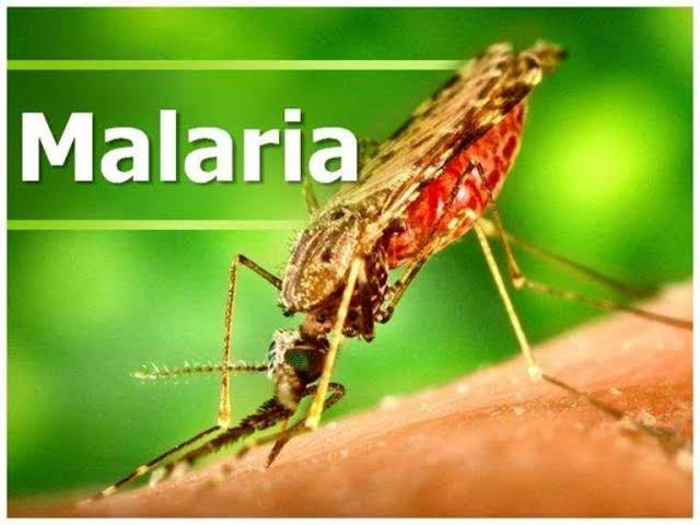 Is Malaria and Typhoid caused by the same thing?